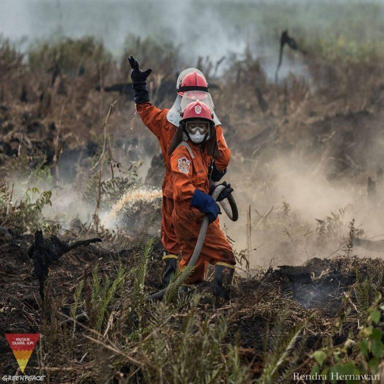 Hutan Tanpa Api 0 (0)