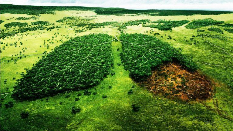 Selamatkan Hutan Rumah Mereka 0 (0)